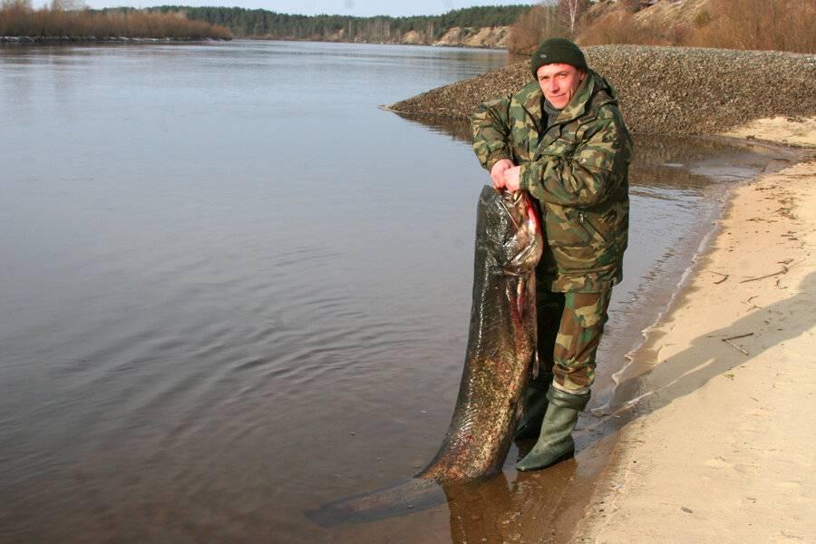 Каналы белоозерска с берега | fishbook