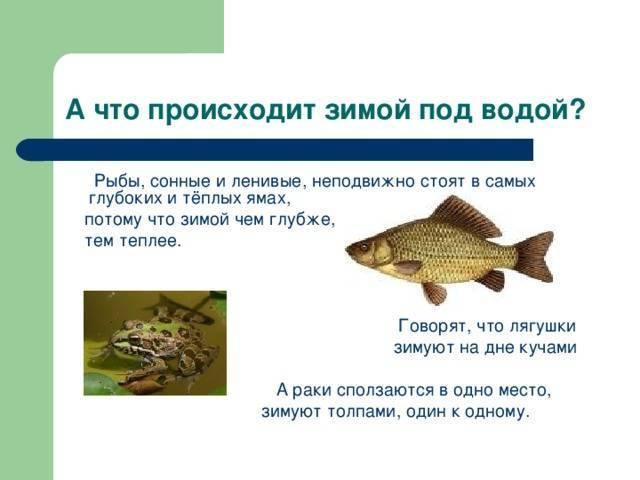 Умеют ли рыбки спать и как создать им условия для сна