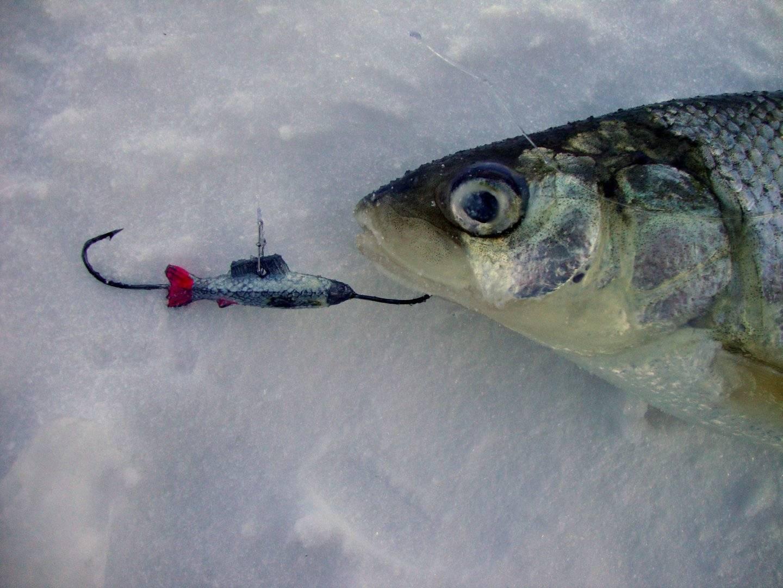 Рыбалка в карелии летом