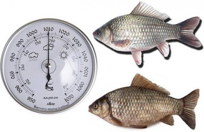 При каком давлении клюет рыба – практические моменты