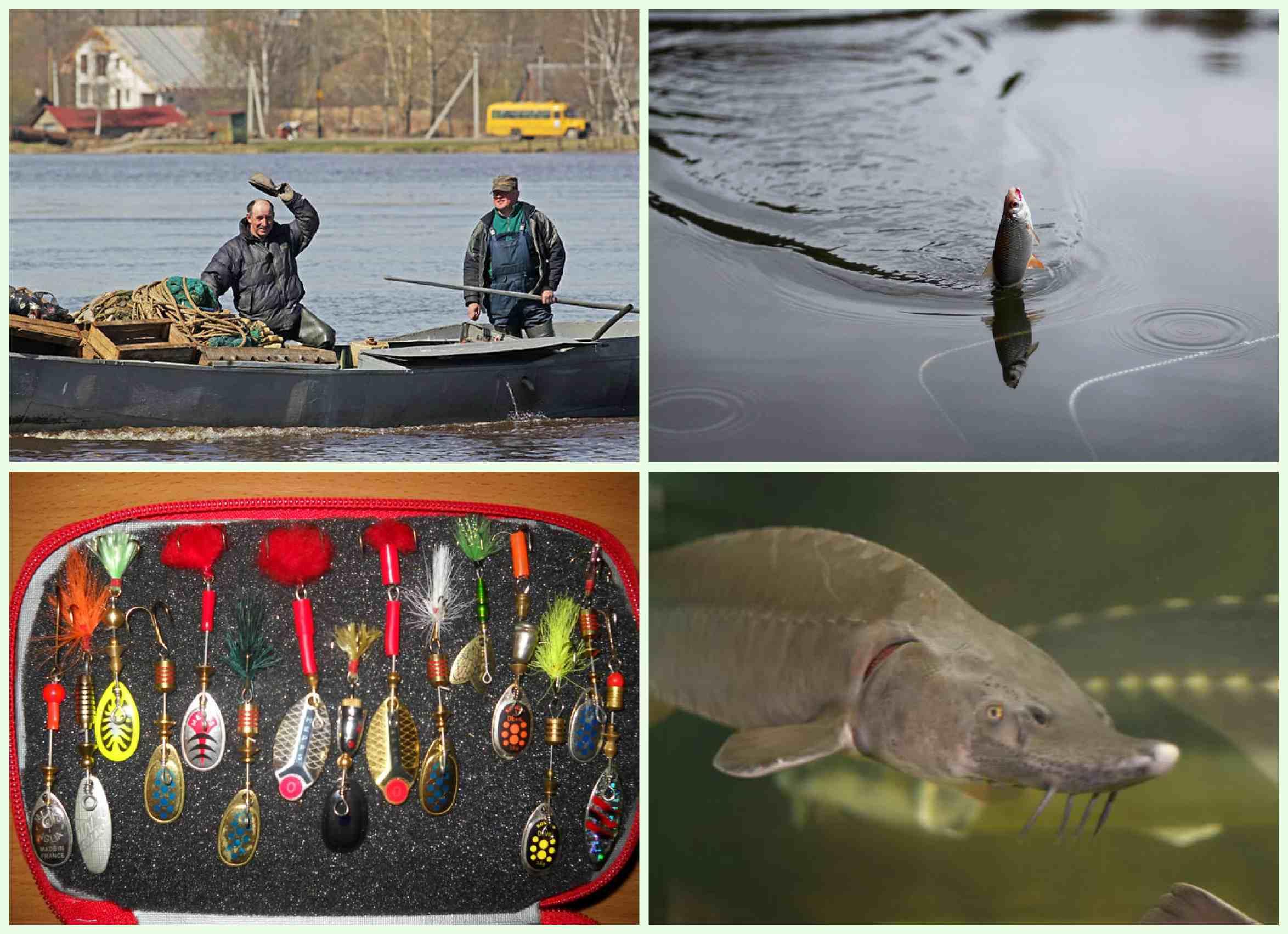 Лещ, рак и щука: рыбалка в ладожских шхерах в августе