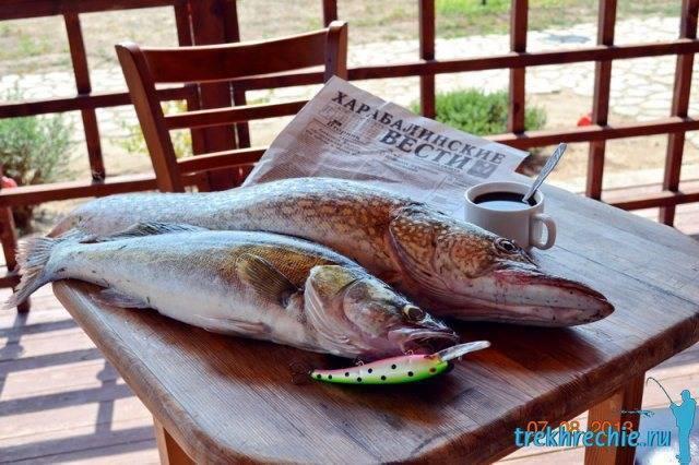 Готовим свежую щуку правильно: 10 популярных рецептов - рыбалка на ахтубе с комфортом - база трёхречье