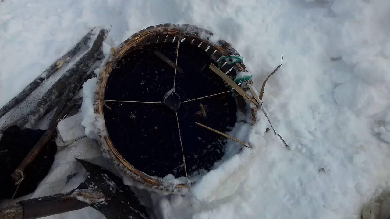 Можно ли поймать вьюна в вершу. ловля вьюна ловушками летом и зимой