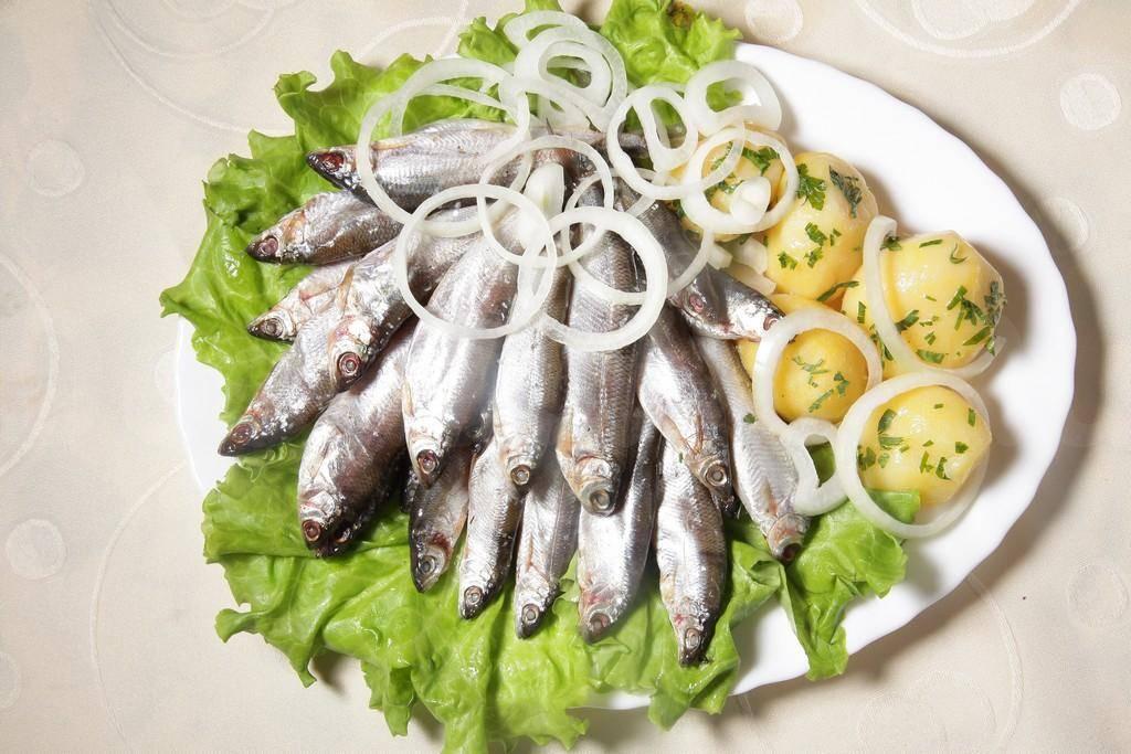 Рыба тугун: места обитания, описание вида, особенности лова