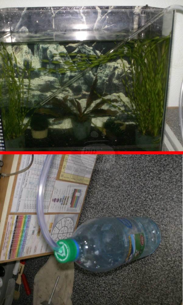 Как очистить аквариум - советы и рекомендации как просто и быстро очистить аквариумы различных форм и видов