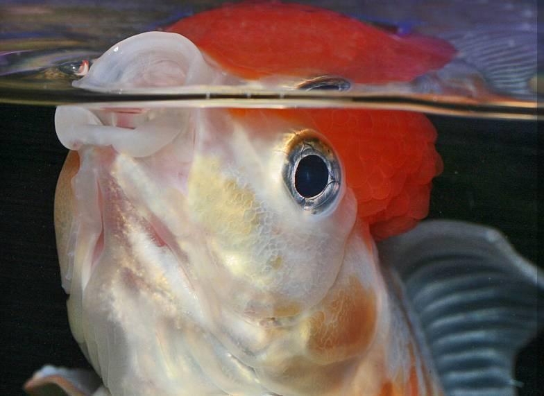 Как продезинфицировать аквариум с рыбками или после гибели рыбок