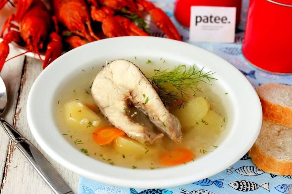 Суп из щуки