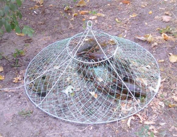 Ловля раков: благоприятное время и способы добычи