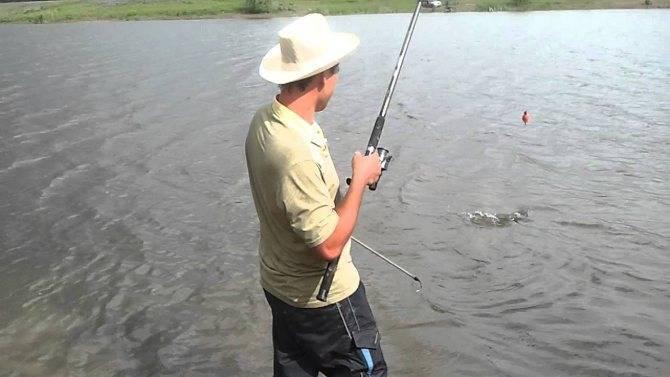 Лучшие наживки и приманки для ловли толстолобика - на что и как ловить, популярные снасти и прикормка, видео