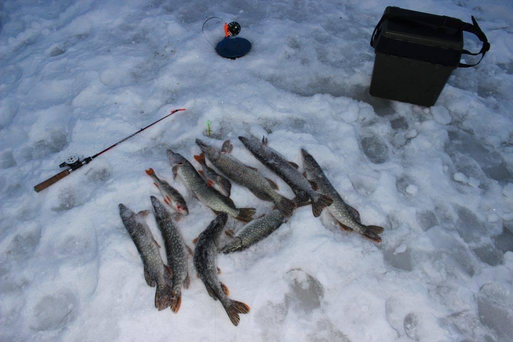 Прогноз клева рыбы костанай