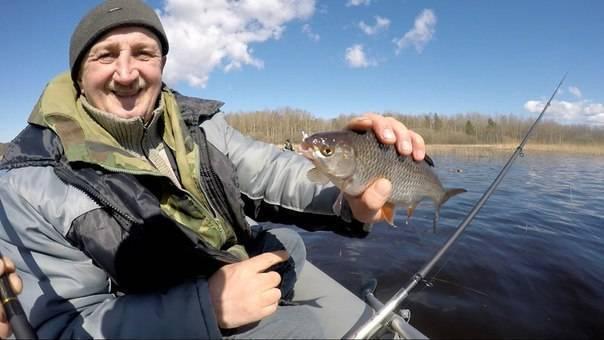 Сибирская плотва (чебак): описание рыбы, выбор снастей и наживки, особенности ловли