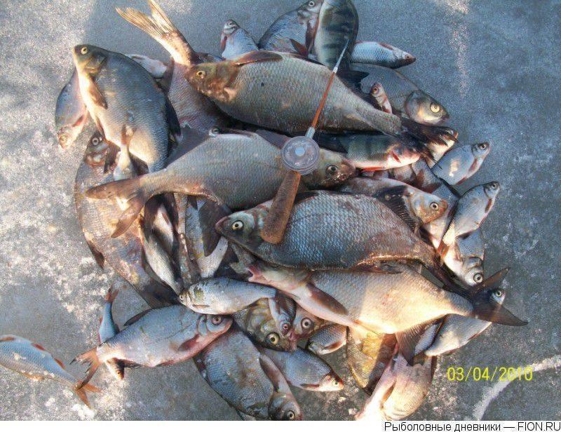 Рыбинское водохранилище базы отдыха, погода, рыбалка, пляжи, история затопления, на карте, как добраться
