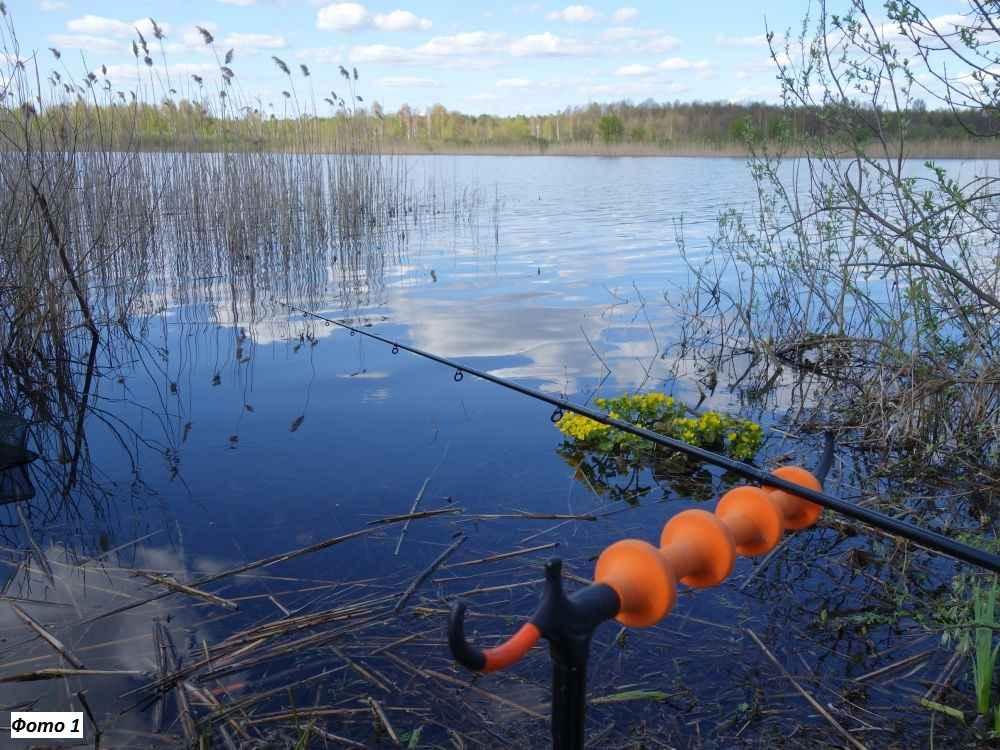 На что ловить карася летом: наживки и прикормки, техника и оснастка