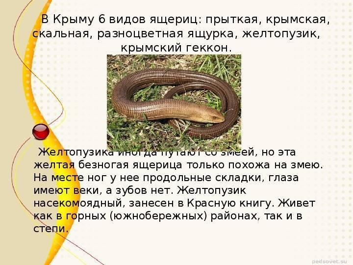 Чем змеи отличаются от ящериц?
