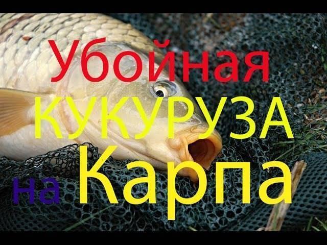 Ловля рыбы на кукурузу