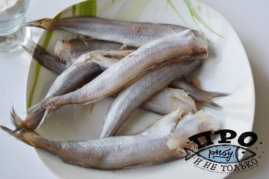 Путассу: польза и вред, важные полезные свойства рыбы