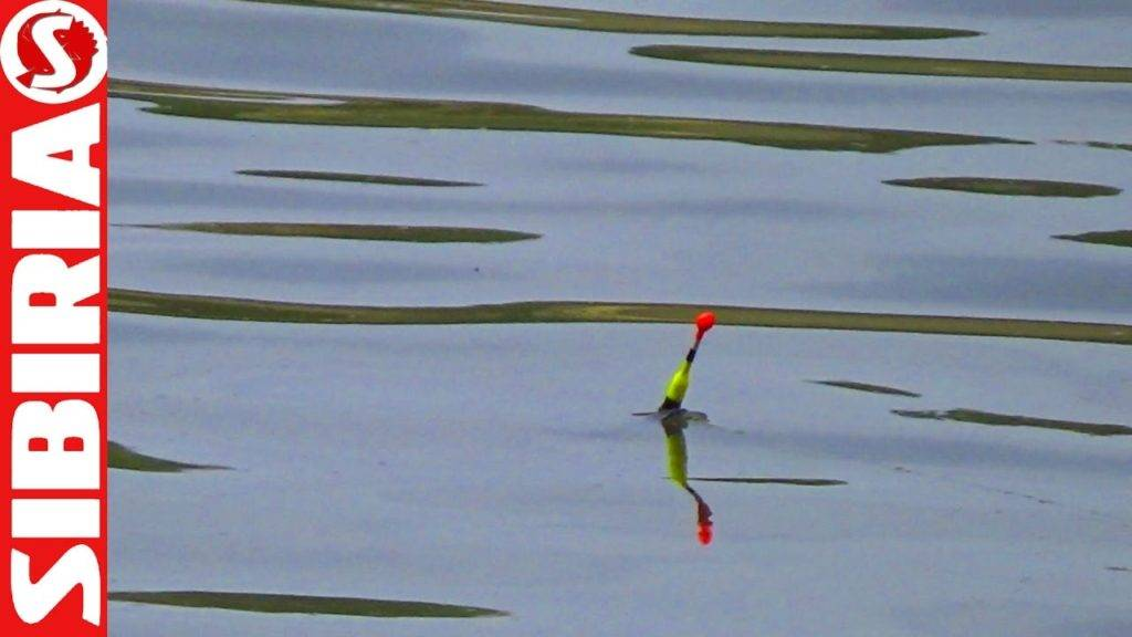 Ловля окуня на поплавочную удочку