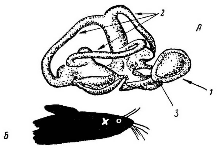 Органы чувств у рыб: описание, особенности, факты