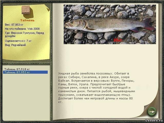 Ловля тайменя на реках сибири – рыбалке.нет