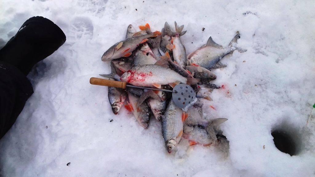 Рыбалка в пермском крае: крупные реки и озера, особенности коммерческой ловли рыбы