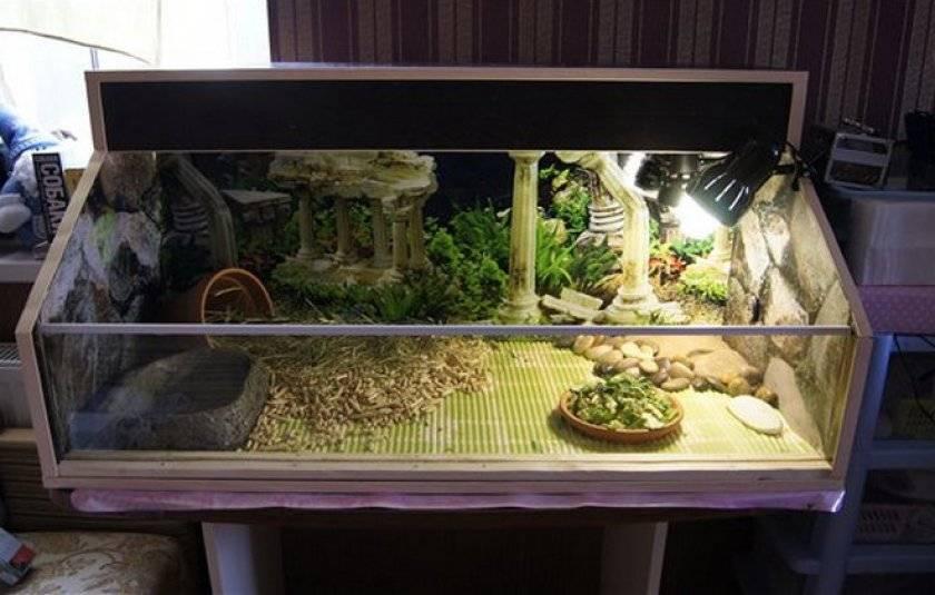 Как выбрать лучший террариум для сухопутной черепахи и на что обратить внимание при выборе