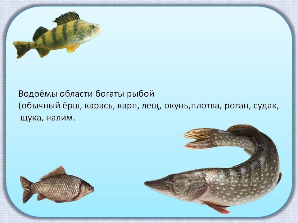 Образ жизни рыб. размеры и вес рыб. интересное о рыбах