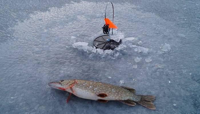 6 лучших жерлиц для зимней рыбалки — рейтинг 2019, зимние жерлицы какие лучше.
