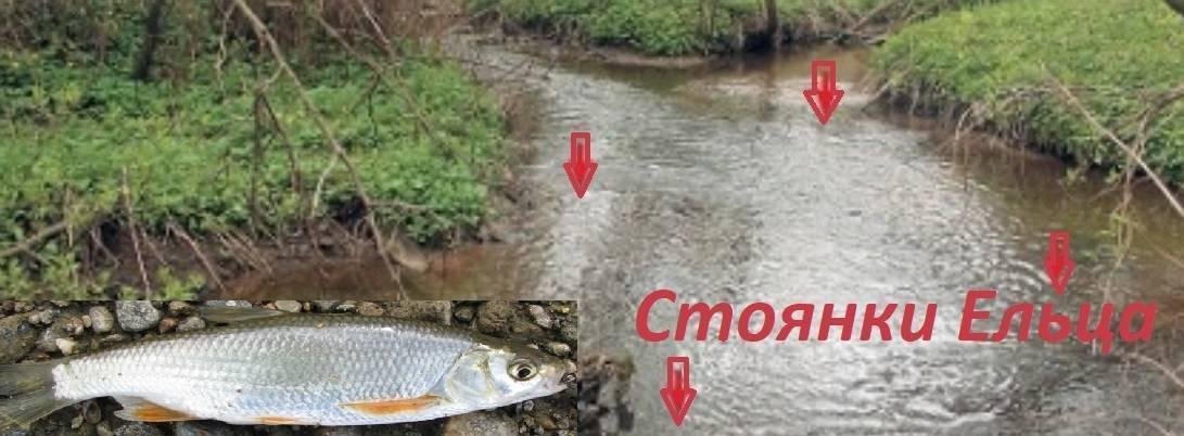 Ловля ельца осенью — общие принципы поимки этой рыбы