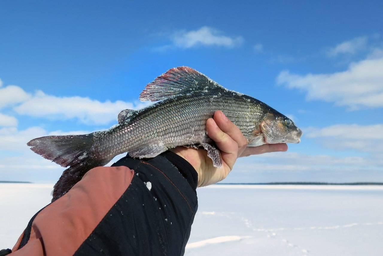 Рыбалка на рыбинском водохранилище: какая рыба водится, ловля на рыболовных базах и «дикарем»