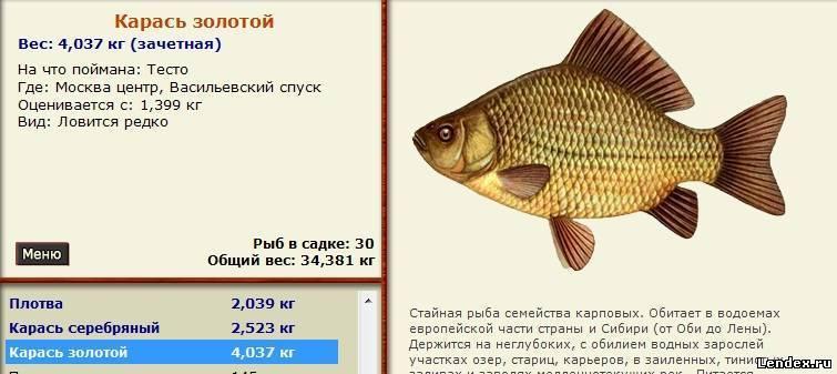 Рыба карась вред и польза. почему лучше не есть карася? | здоровье человека
