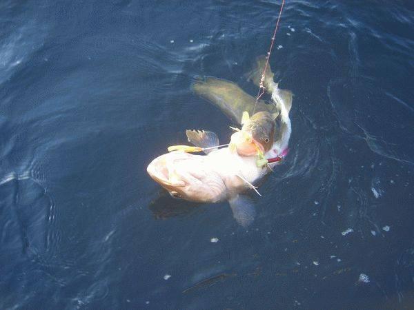 Обзор бесплатной и платной рыбалки в ногинском районе – суперулов – интернет-портал о рыбалке
