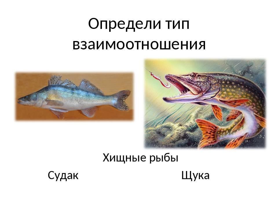 Биотические взаимодействия. 9-й класс