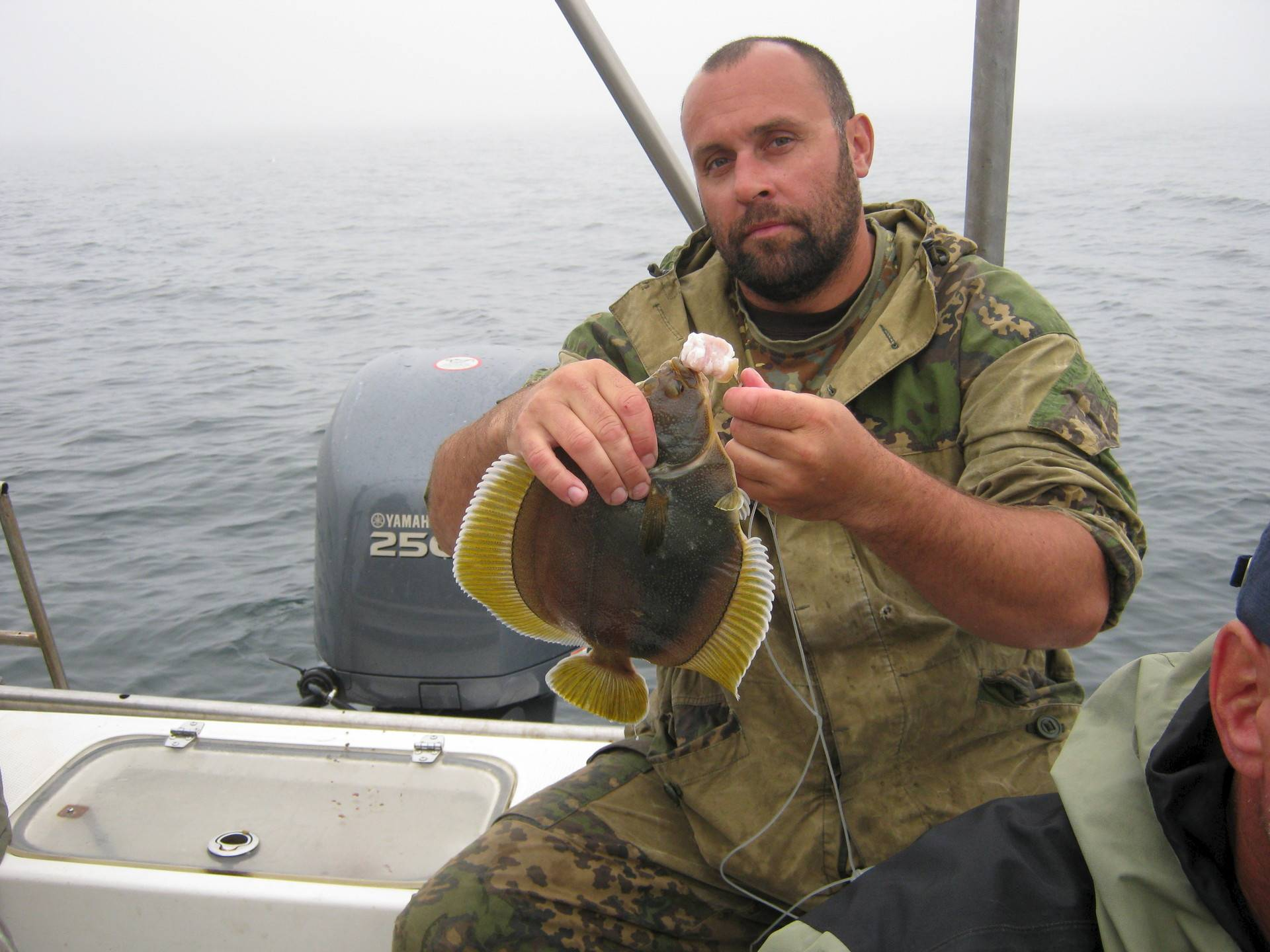 Камбала: полезные и опасные свойства рыбы