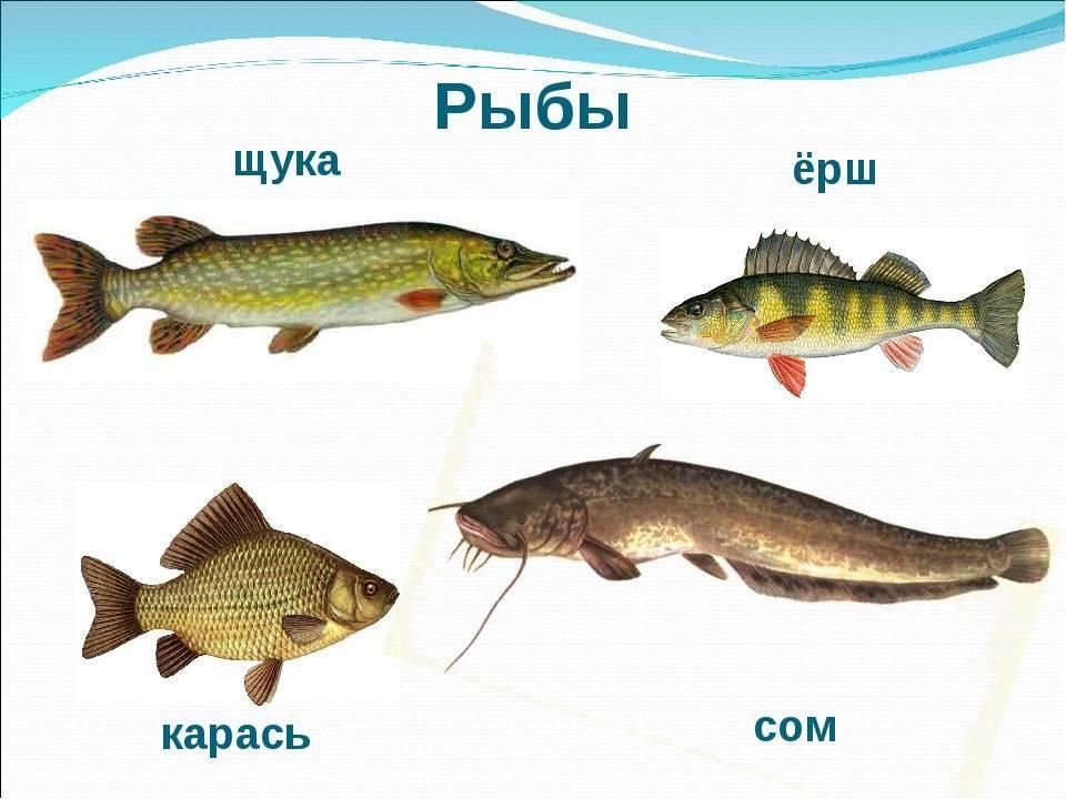 Строение и образ жизни рыб. любительское рыболовство [с иллюстрациями]