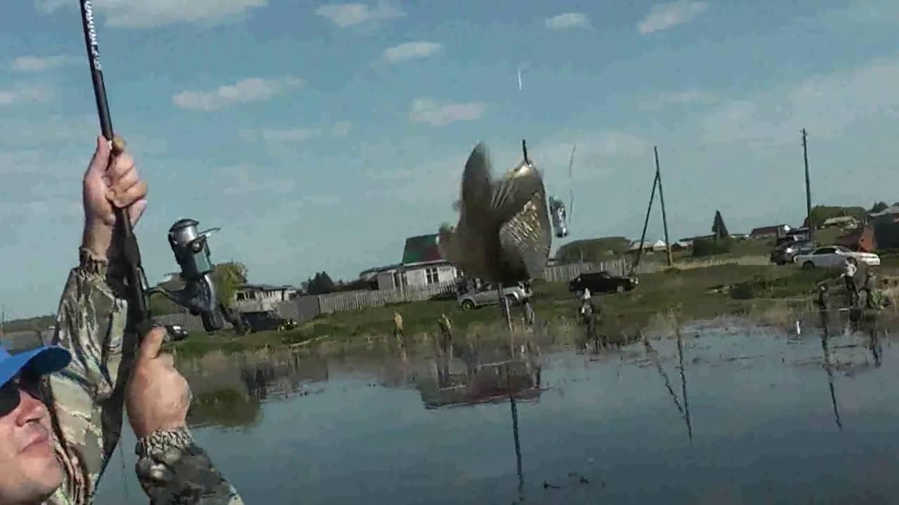 Сообщества › Охота и Рыбалка › Блог › За чебаком. Озеро Изюк.