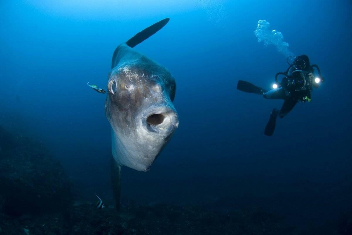 Все самое интересное о луне в знаках: луна в рыбах :: инфониак
