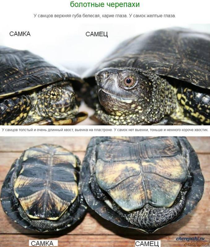 Критерии констатации смерти черепахи