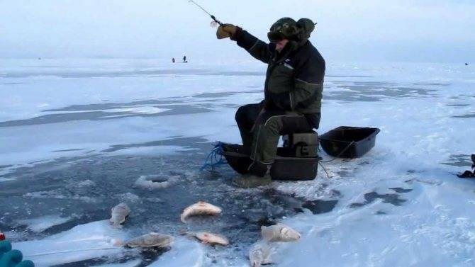 Особенности ловли плотвы зимой - тактика, снасти и приманки   berlogakarelia.ru