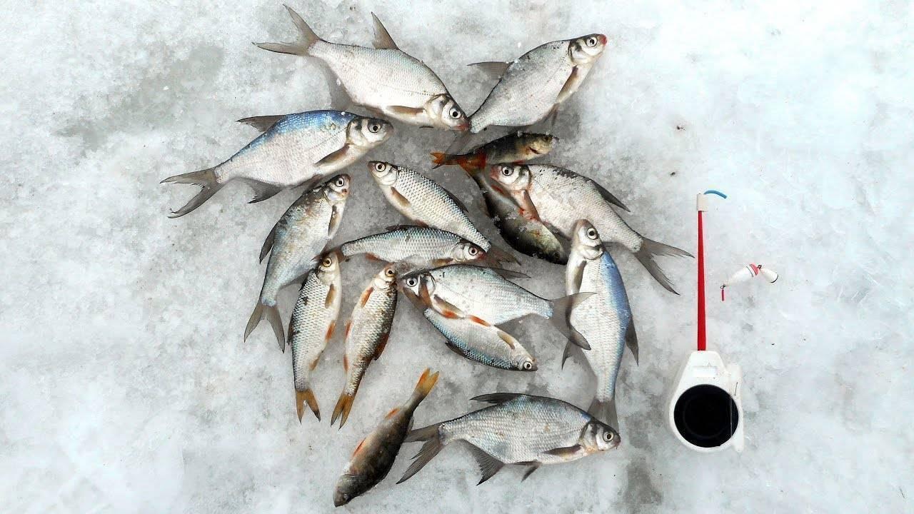 Секреты ловли и клев рыбы в глухозимье