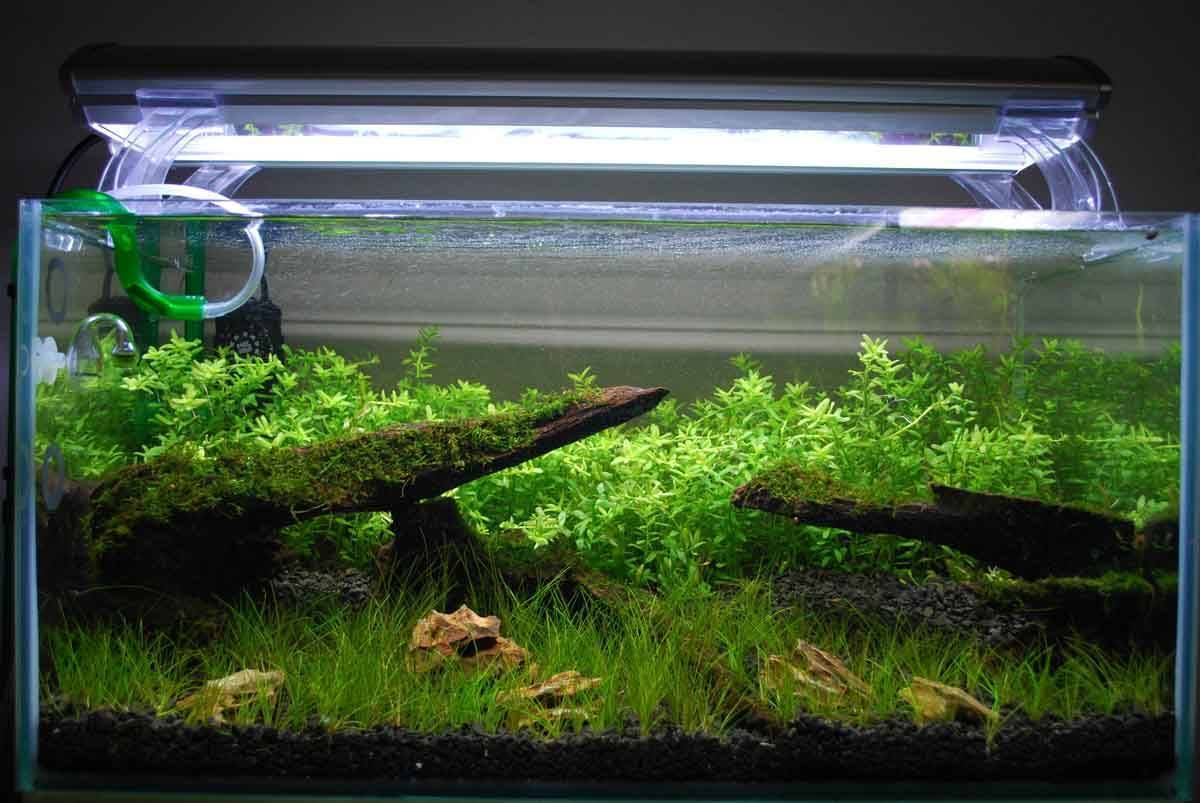 Какое должно быть освещение для аквариума с растениями