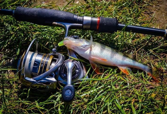 Рыбалка на спиннинг   спиннинг клаб - советы для начинающих рыбаков спиннинг для микроджига, как выбрать? рейтинг топ 5 палок