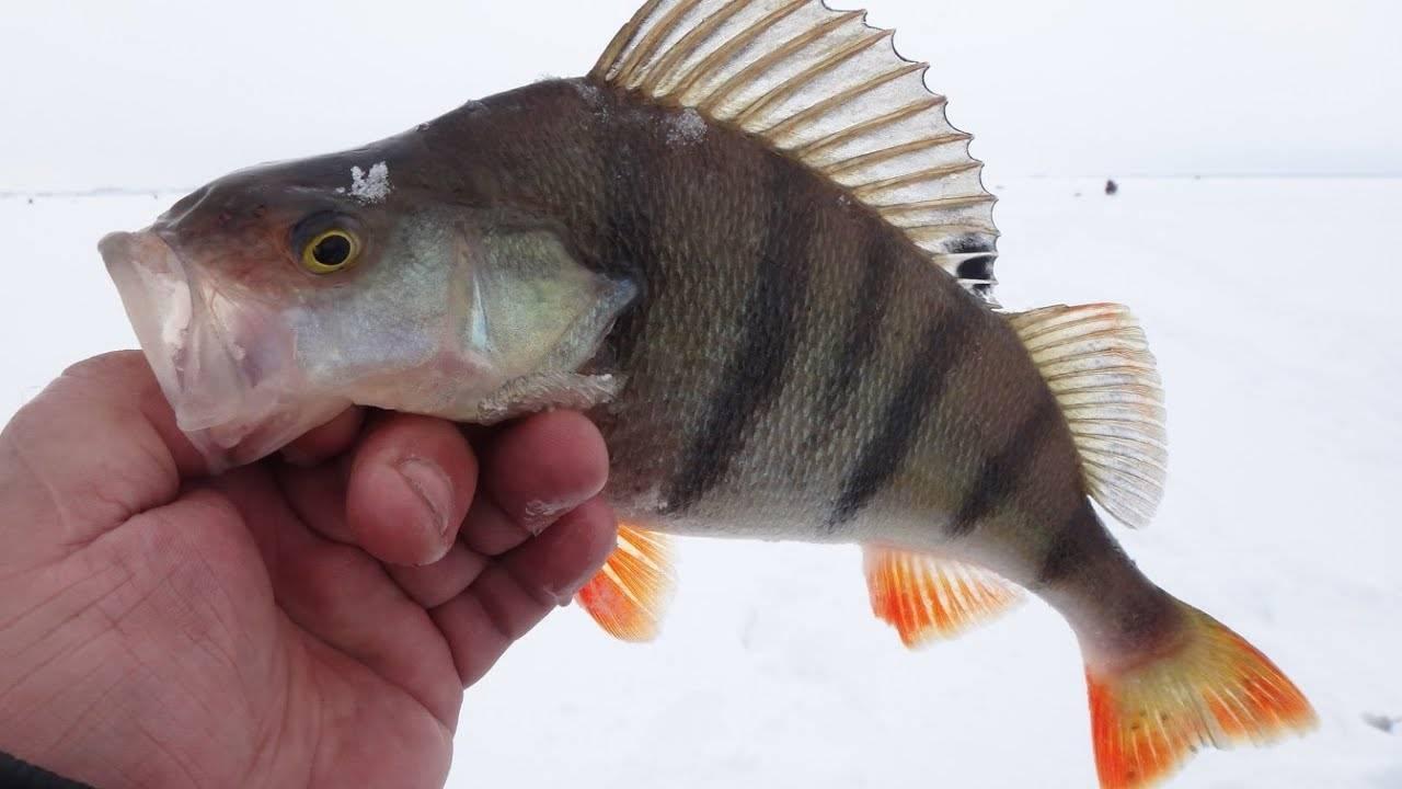 Рыбалка в омске и омской области