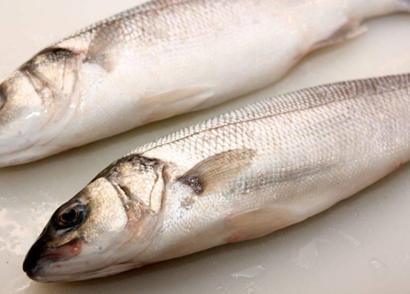Сибас рыба – фото, описание, среда обитания, полезные свойства, минеральные вещества и витамины.