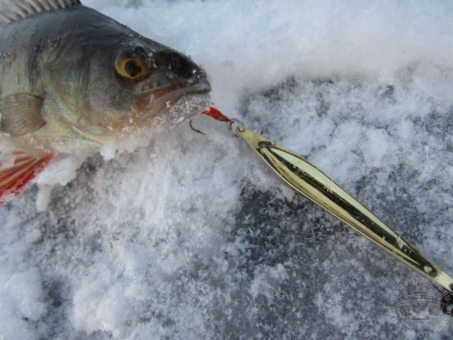 Рыбалка на исети и озере мелкое зимой на блесну