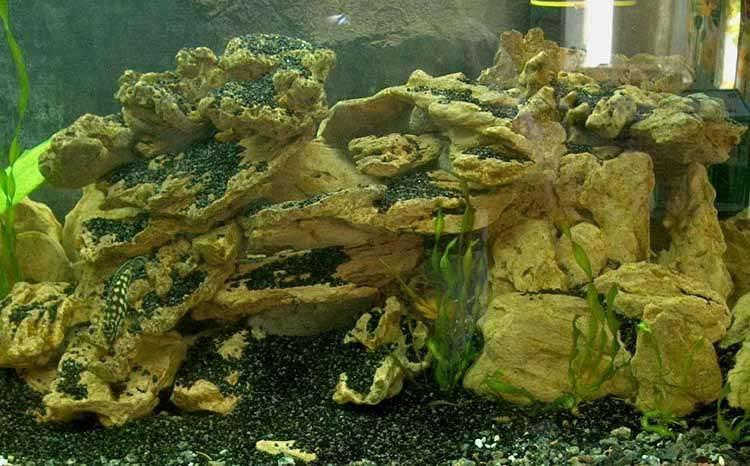 Узв для выращивания рыбы своими руками: оборудование для аквафермы, схемы для выращивания – установка замкнутого водоснабжения, бассейн и биозагрузка