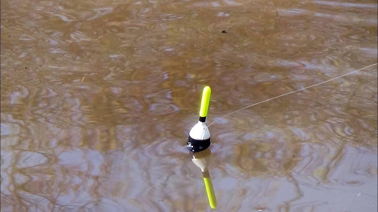 Как ловить белого амура на фидер