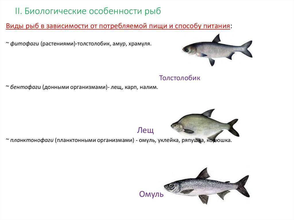 Рыба корюшка — в чем особенность?