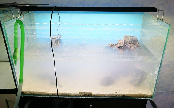 Сколько отстаивать воду для аквариумов: как подготавливать воду, нужно ли отстаивать, время на подготовку аквариумной воды