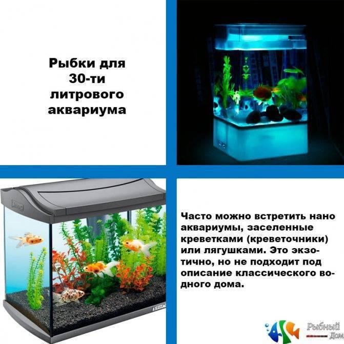 Для чего необходим и как правильно использовать кондиционер для воды в аквариуме?