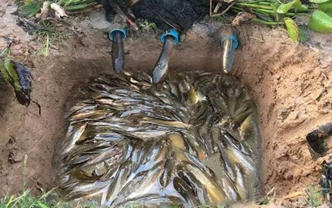 Как ловить рыбу: подготовка, выбор места, ловля